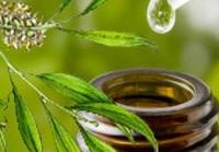 A teafa illóolaj ,mint fertőtlenítő,tisztítószer +recept