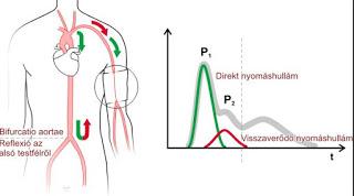 Amit tudnod kell a vérnyomás méréssel és a vérnyomással kapcsolatban ,itt megtalálod